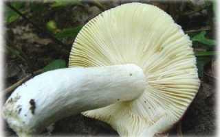 Съедобные грибы с фото и описаниями