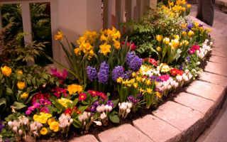 Первоцвет весенний: описание сорта с фото, отзывы, посадка и уход