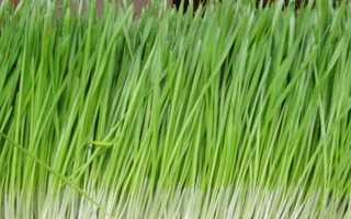Дикранелла разностороннелистная: описание с фото, где растет, свойства