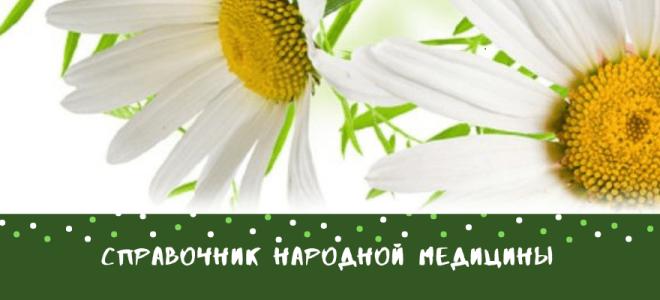 Уснея густобородая: описание с фото, где растет, свойства