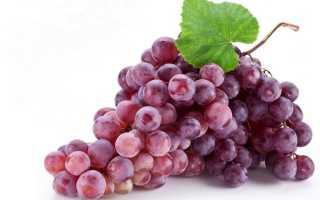 Феллинус виноградный: описание вида и где растет, фото