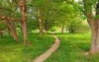 Рамалина ясеневая: описание с фото, где растет, свойства